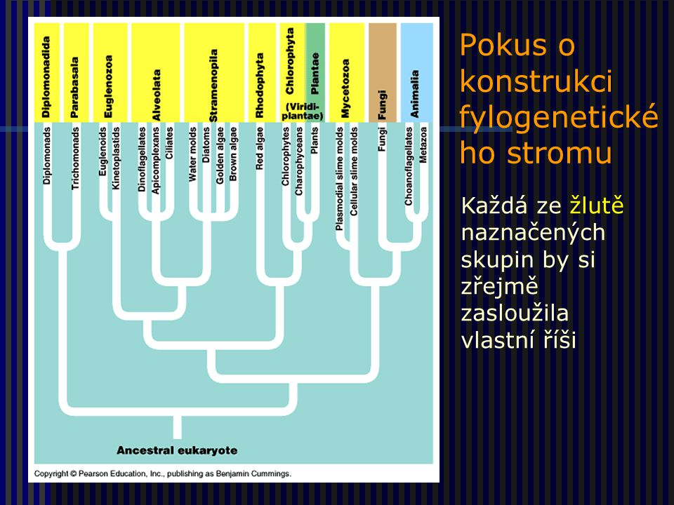 Pokus o konstrukci fylogenetického stromu