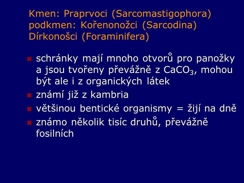 Kmen: Praprvoci (Sarcomastigophora) podkmen: Kořenonožci (Sarcodina) Dírkonošci (Foraminifera)