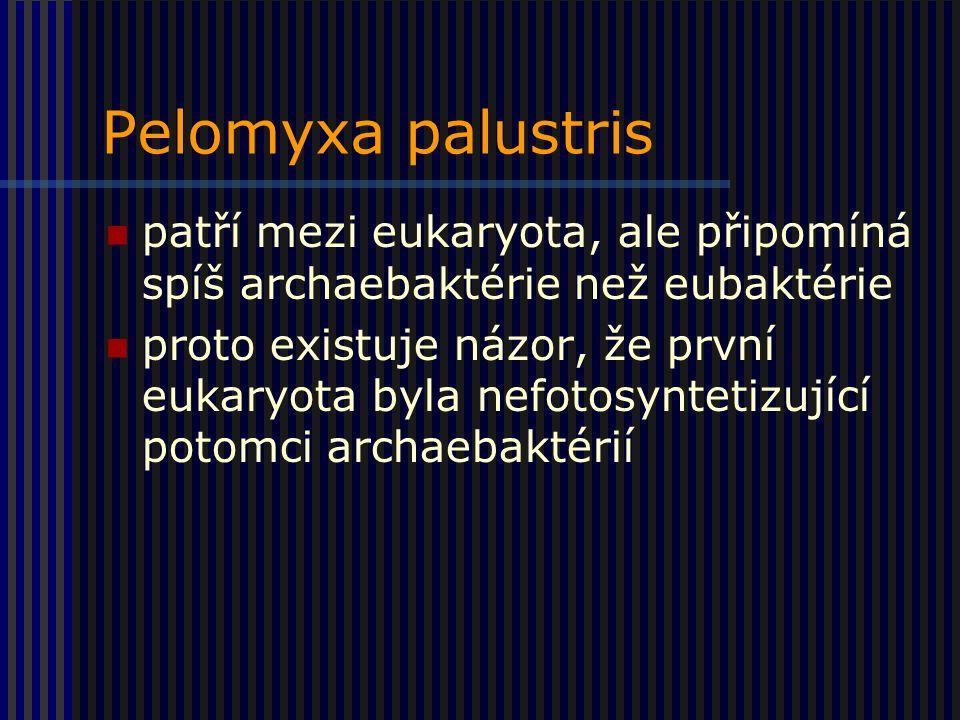 Pelomyxa palustris patří mezi eukaryota, ale připomíná spíš archaebaktérie než eubaktérie.