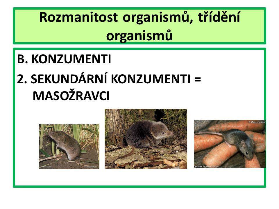 Rozmanitost organismů, třídění organismů