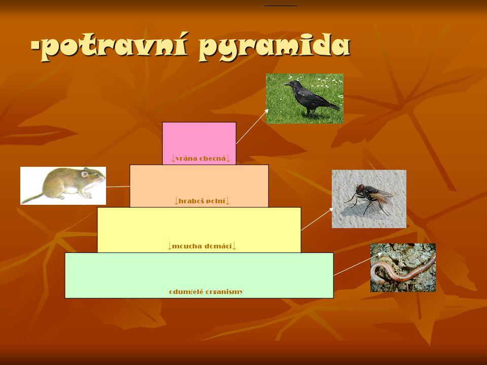▪potravní pyramida ↓moucha domácí↓ ↓vrána obecná↓ ↓hraboš polní↓