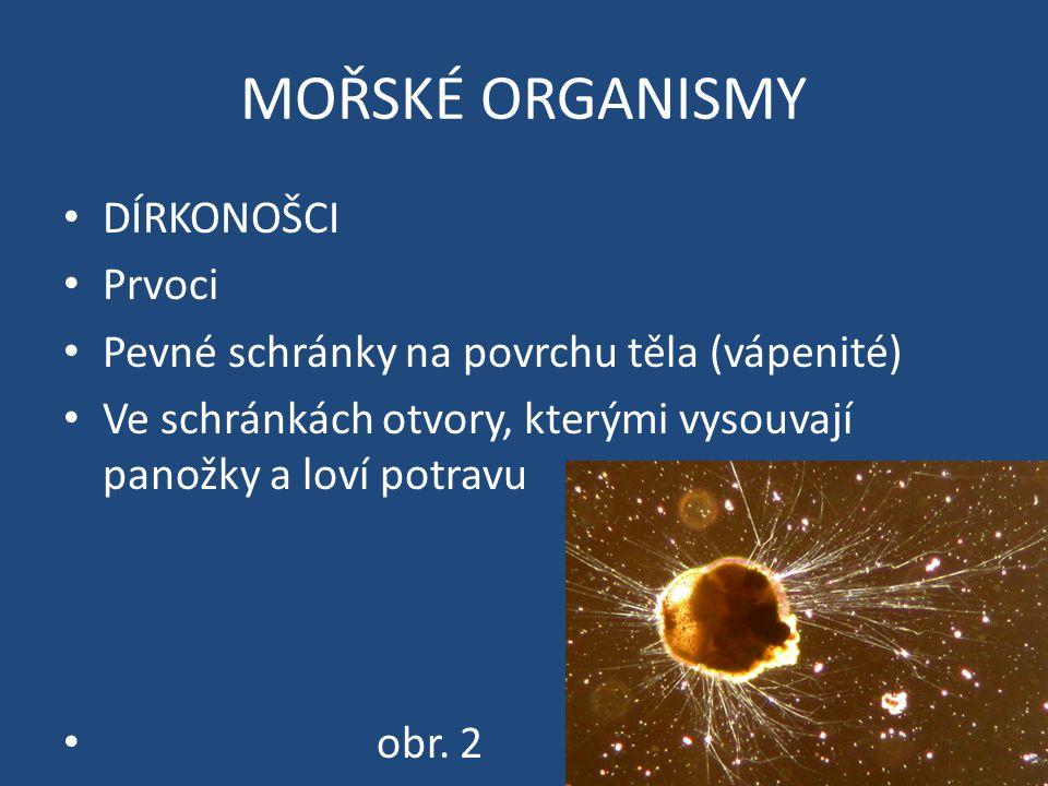 MOŘSKÉ ORGANISMY DÍRKONOŠCI Prvoci