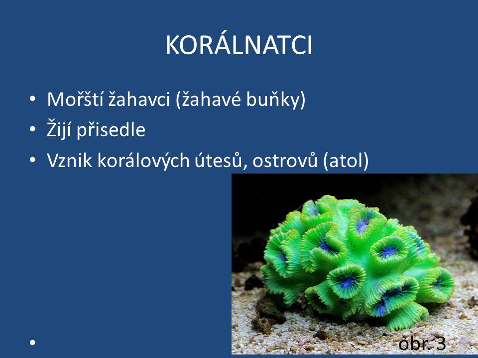 KORÁLNATCI Mořští žahavci (žahavé buňky) Žijí přisedle