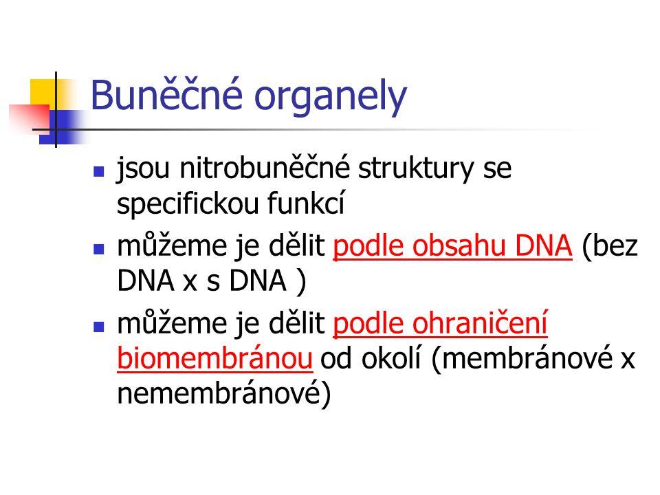 Buněčné organely jsou nitrobuněčné struktury se specifickou funkcí