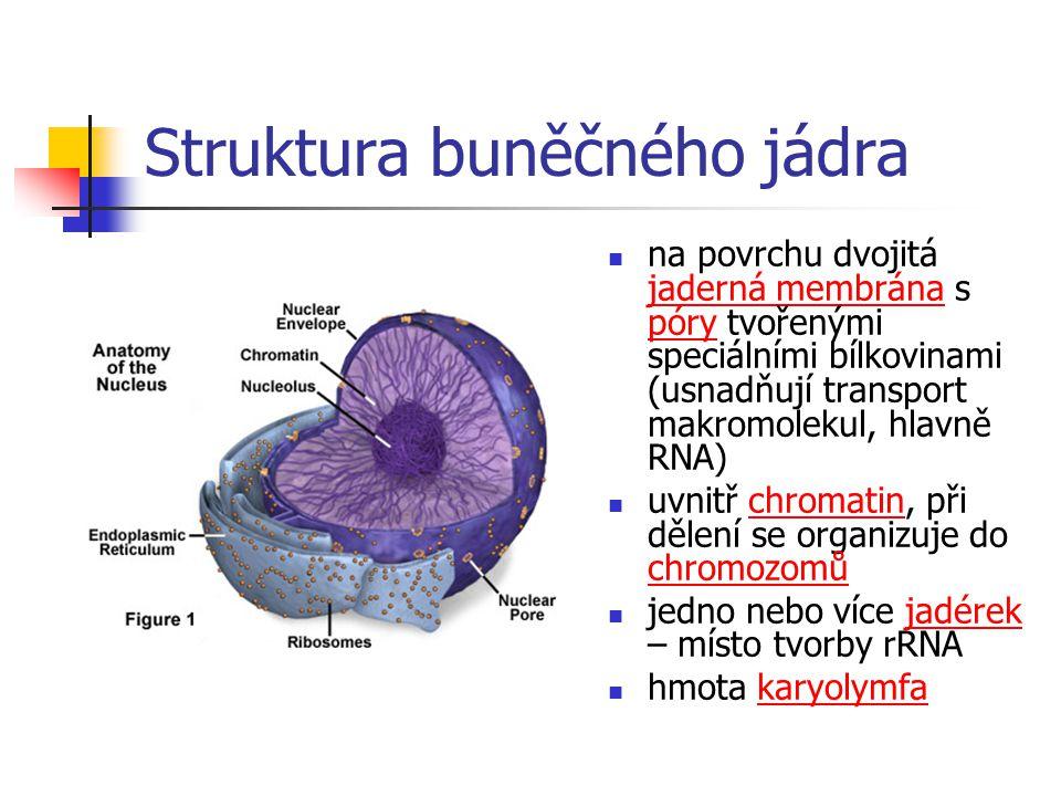 Struktura buněčného jádra