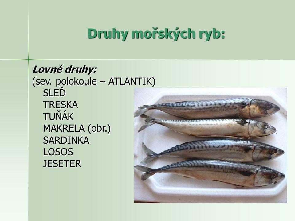 Druhy mořských ryb: Lovné druhy: (sev. polokoule – ATLANTIK) SLEĎ