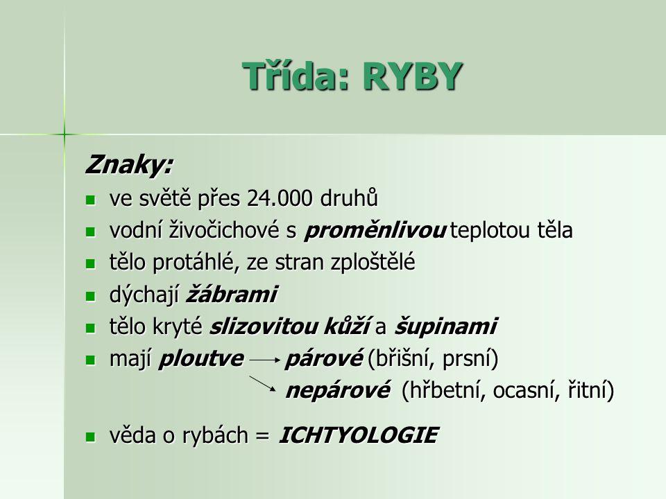 Třída: RYBY Znaky: ve světě přes 24.000 druhů