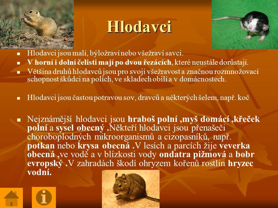 Hlodavci Hlodavci jsou malí, býložraví nebo všežraví savci. V horní i dolní čelisti mají po dvou řezácích, které neustále dorůstají.