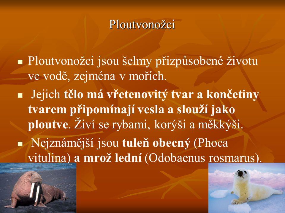 Ploutvonožci Ploutvonožci jsou šelmy přizpůsobené životu ve vodě, zejména v mořích.