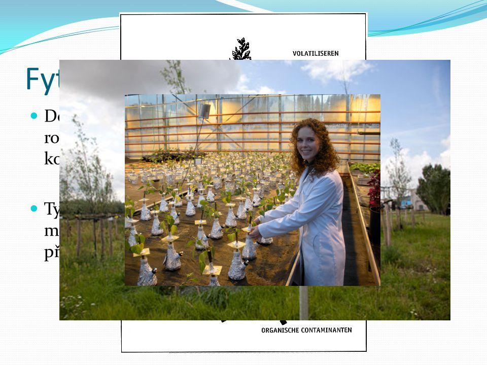 Fytoremediace Definováno jako technologie využívající zelené rostliny k fixaci, akumulaci a rozkladu nebezpečných kontaminantů z vody, půdy a vzduchu.
