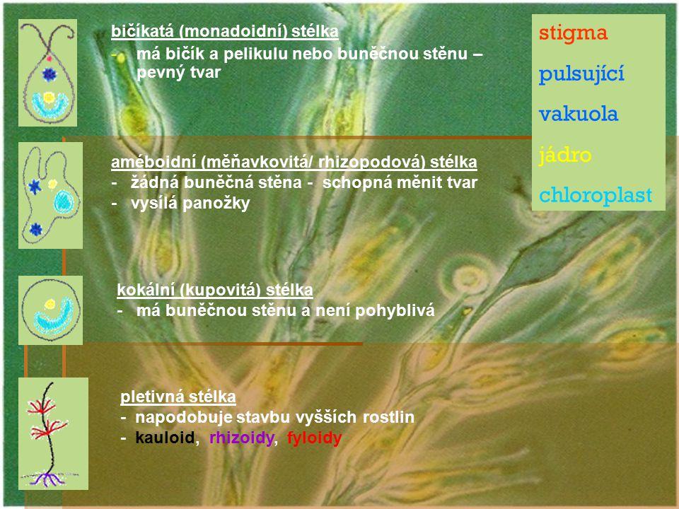 stigma pulsující vakuola jádro chloroplast