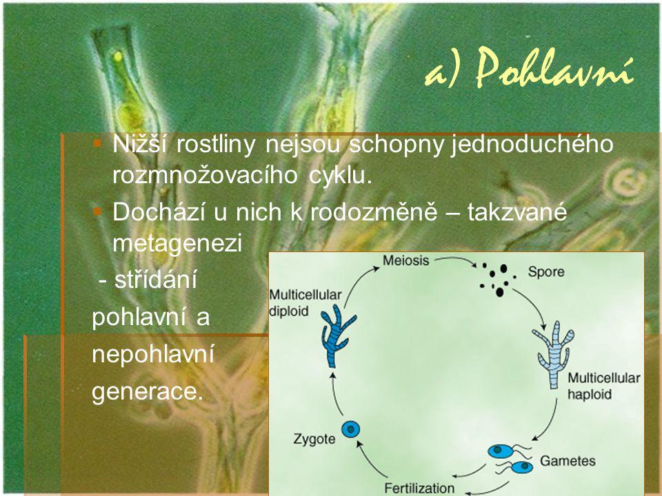 a) Pohlavní Nižší rostliny nejsou schopny jednoduchého rozmnožovacího cyklu. Dochází u nich k rodozměně – takzvané metagenezi.
