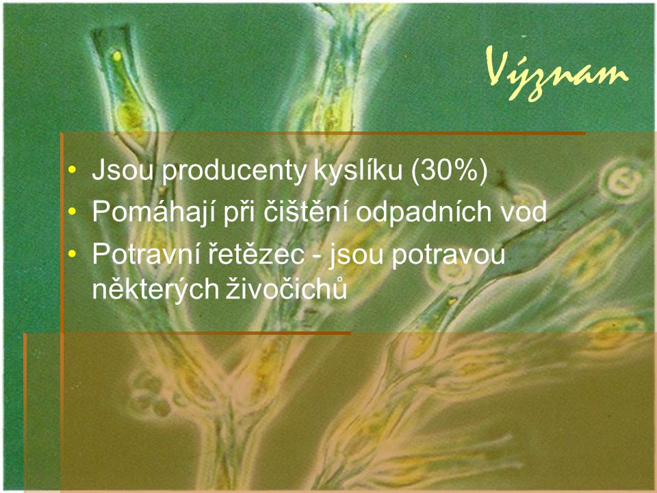 Význam Jsou producenty kyslíku (30%)