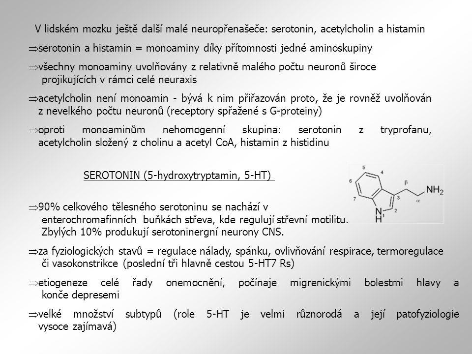 V lidském mozku ještě další malé neuropřenašeče: serotonin, acetylcholin a histamin