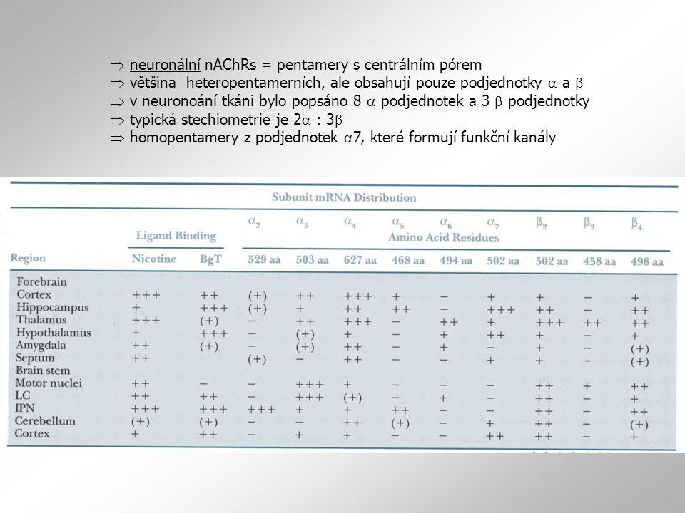  neuronální nAChRs = pentamery s centrálním pórem  většina heteropentamerních, ale obsahují pouze podjednotky a a b  v neuronoání tkáni bylo popsáno 8 a podjednotek a 3 b podjednotky  typická stechiometrie je 2a : 3b  homopentamery z podjednotek a7, které formují funkční kanály