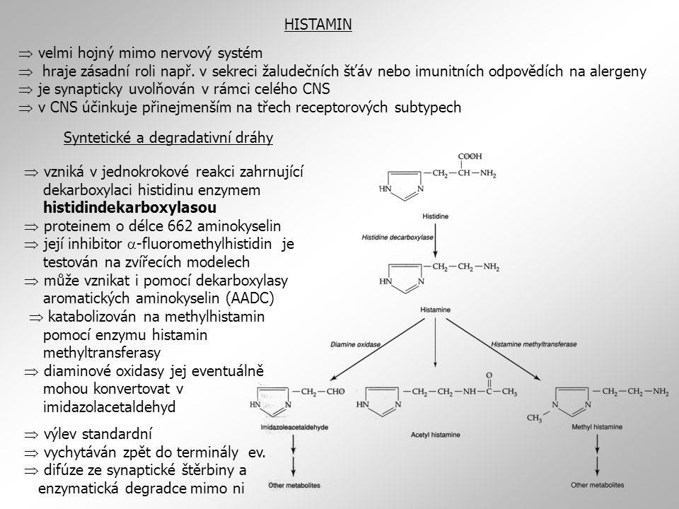Syntetické a degradativní dráhy
