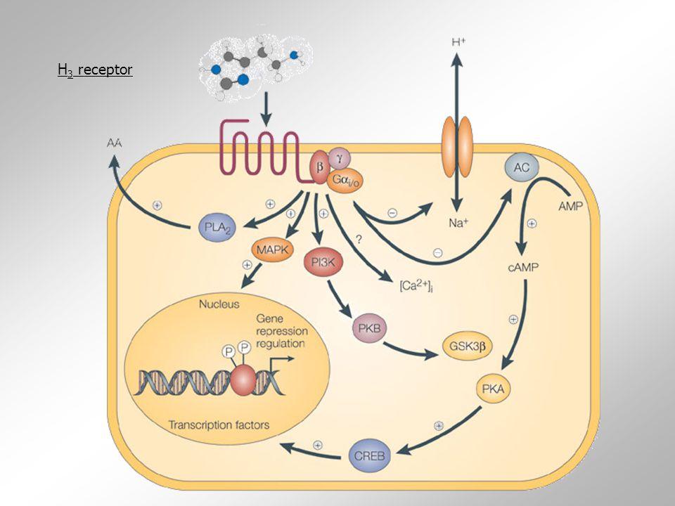H3 receptor