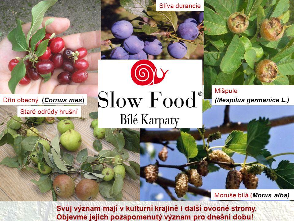 Svůj význam mají v kulturní krajině i další ovocné stromy.