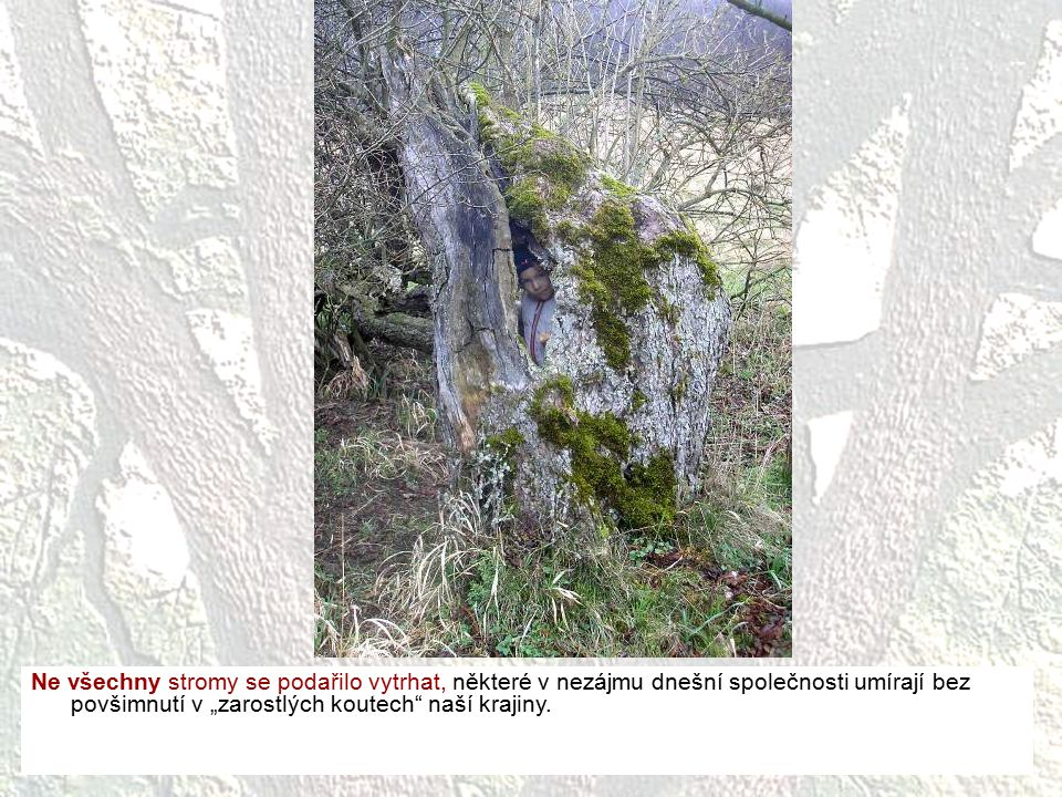"""Ne všechny stromy se podařilo vytrhat, některé v nezájmu dnešní společnosti umírají bez povšimnutí v """"zarostlých koutech naší krajiny."""