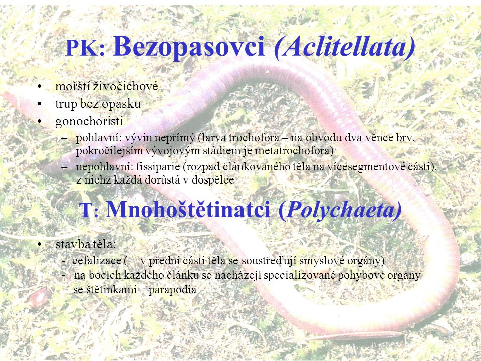 PK: Bezopasovci (Aclitellata) T: Mnohoštětinatci (Polychaeta)