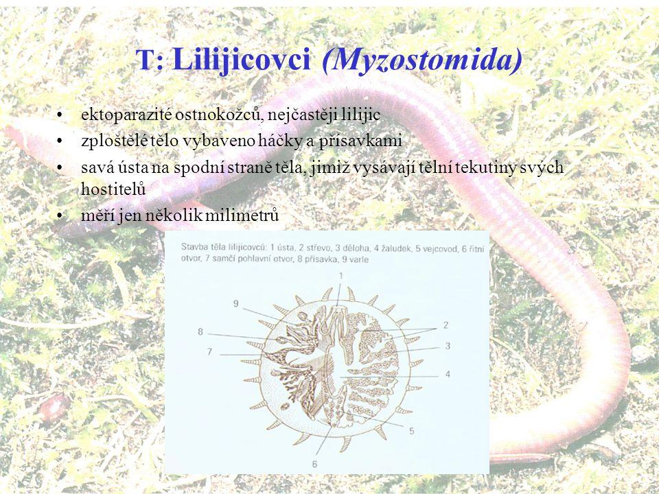 T: Lilijicovci (Myzostomida)