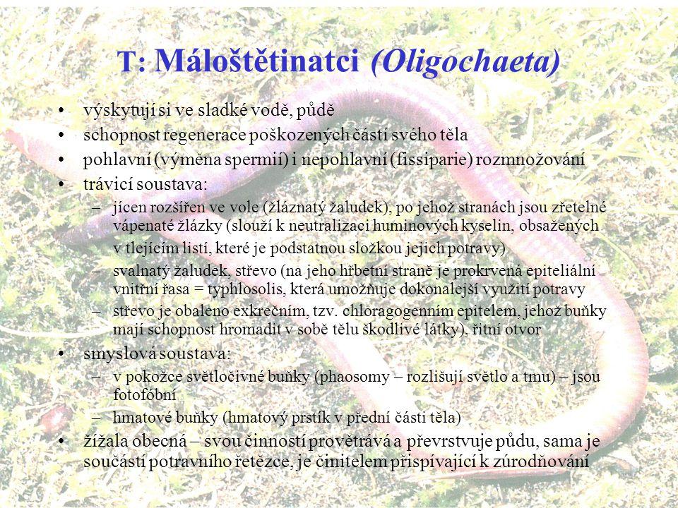 T: Máloštětinatci (Oligochaeta)