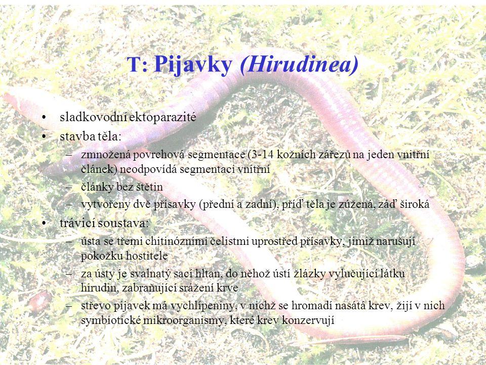 T: Pijavky (Hirudinea)