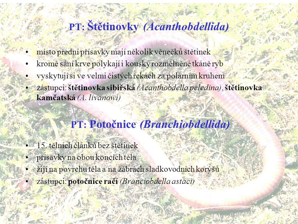 PT: Štětinovky (Acanthobdellida) PT: Potočnice (Branchiobdellida)