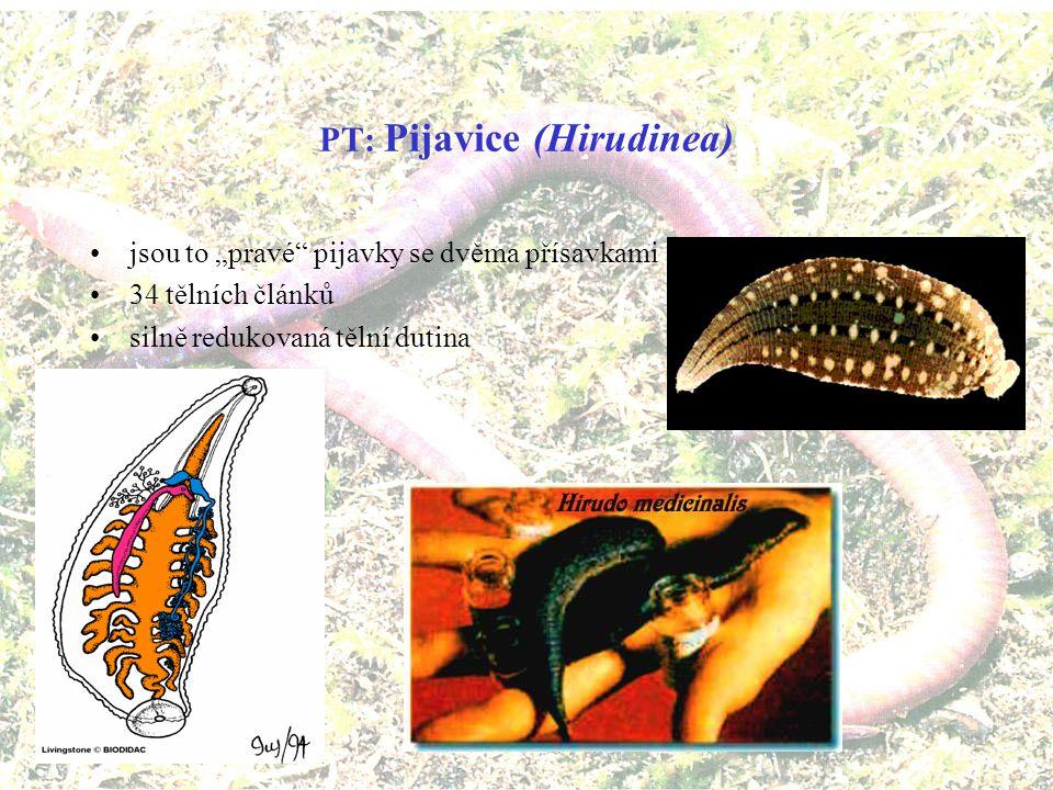 PT: Pijavice (Hirudinea)