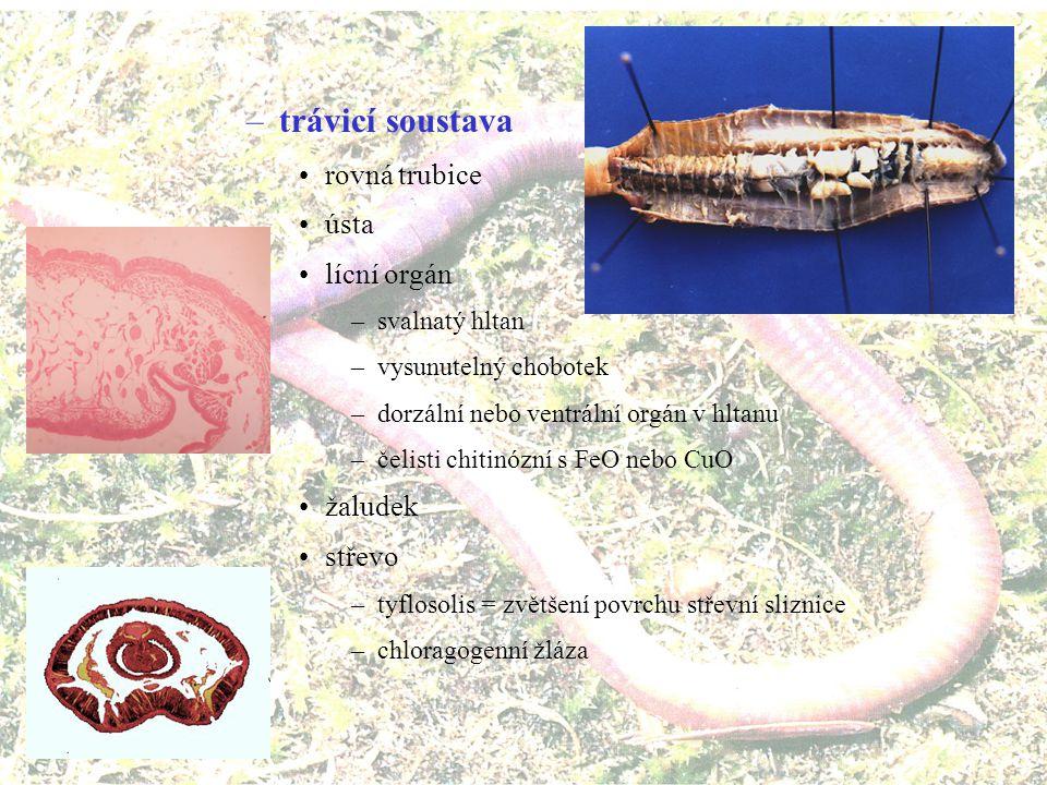 trávicí soustava rovná trubice ústa lícní orgán žaludek střevo