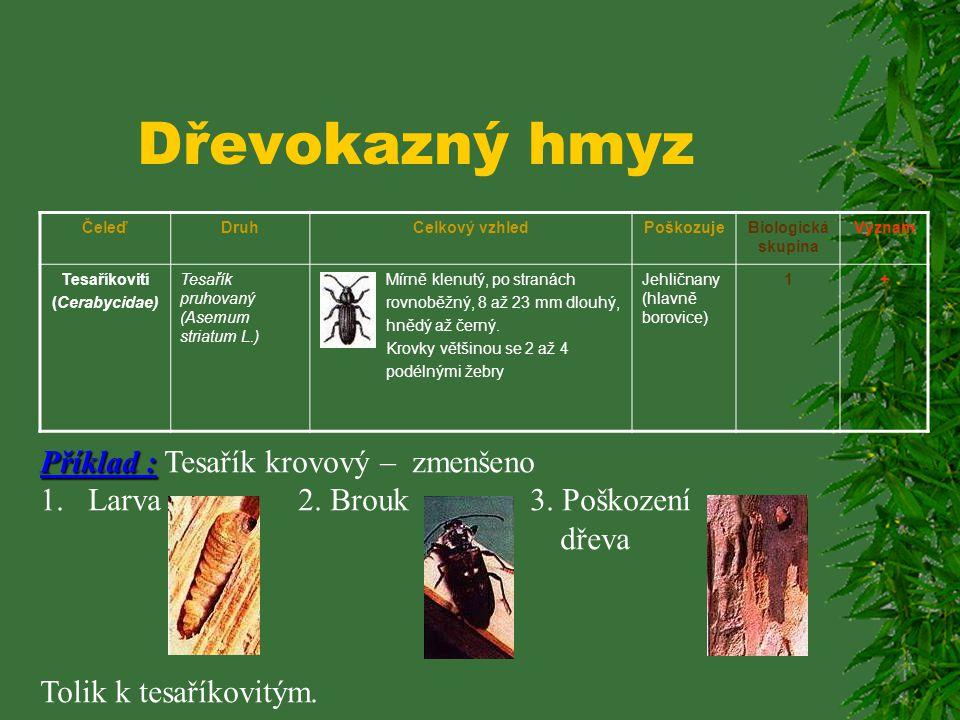 Dřevokazný hmyz Příklad : Tesařík krovový – zmenšeno