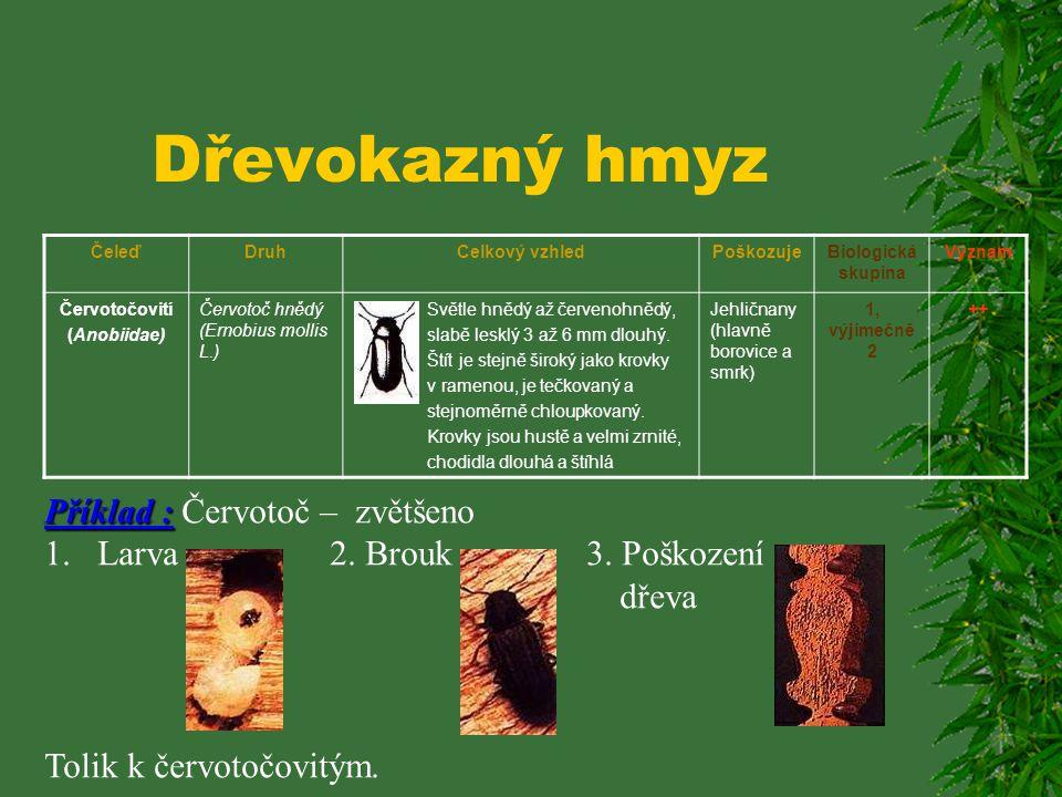 Dřevokazný hmyz Příklad : Červotoč – zvětšeno