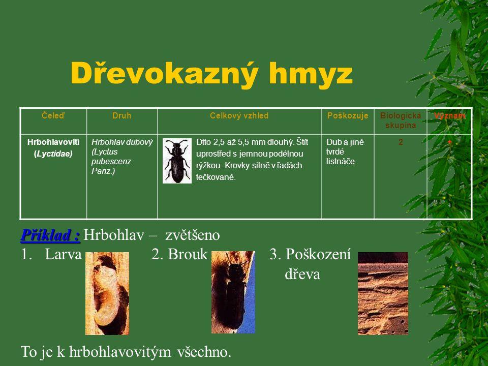 Dřevokazný hmyz Příklad : Hrbohlav – zvětšeno