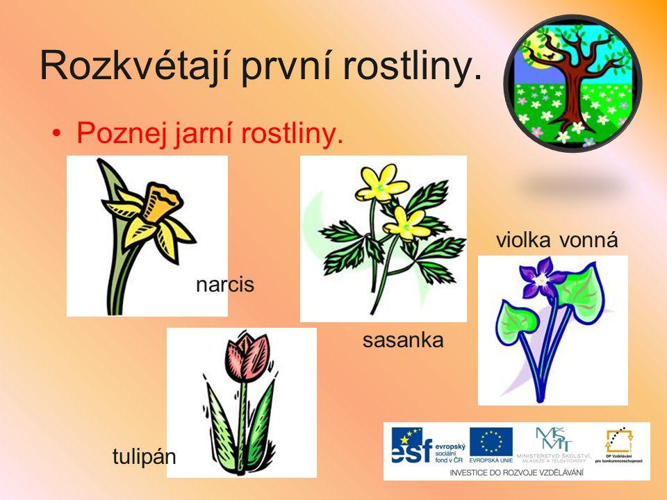 Rozkvétají první rostliny.