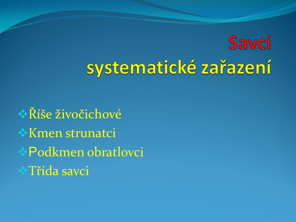 Savci systematické zařazení