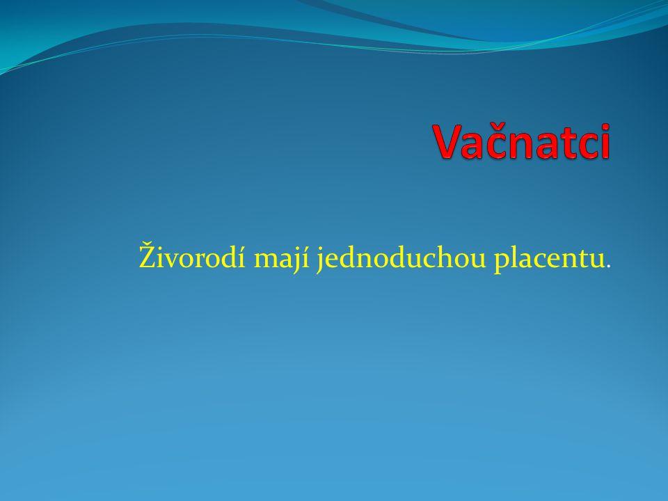 Živorodí mají jednoduchou placentu.