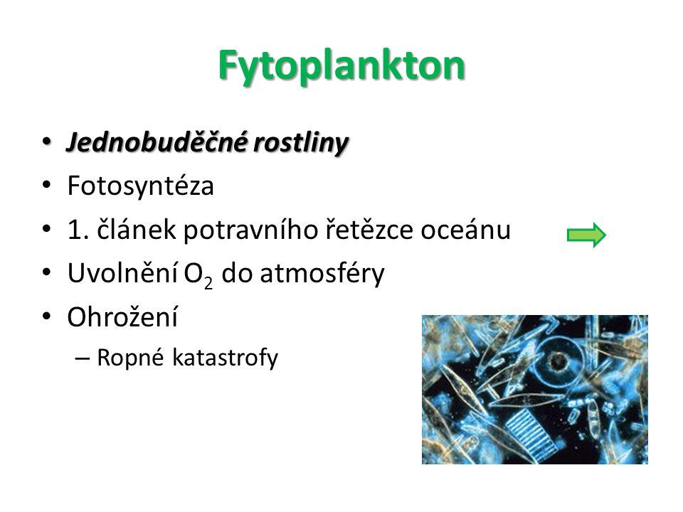 Fytoplankton Jednobuděčné rostliny Fotosyntéza
