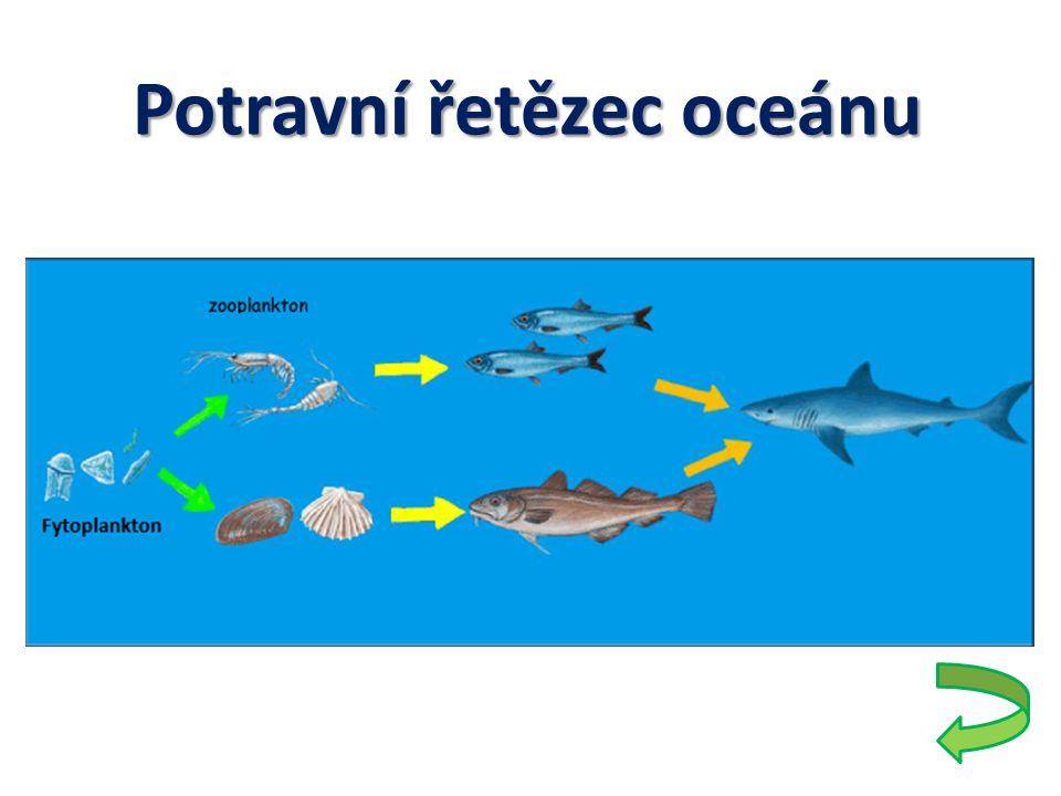 Potravní řetězec oceánu