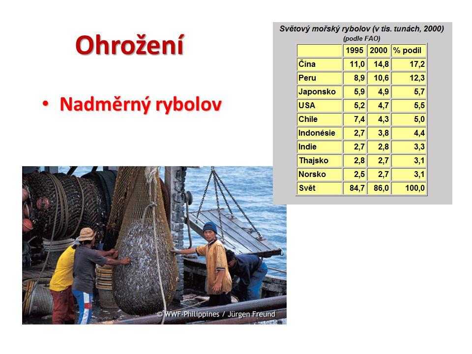 Ohrožení Nadměrný rybolov