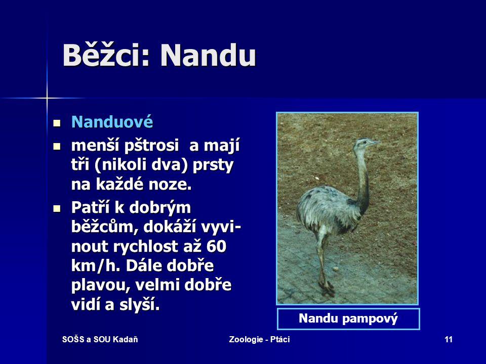 Běžci: Nandu Nanduové. menší pštrosi a mají tři (nikoli dva) prsty na každé noze.
