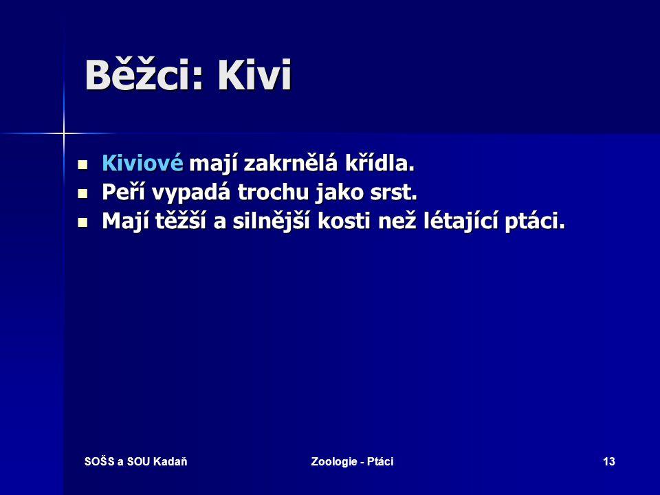 Běžci: Kivi Kiviové mají zakrnělá křídla.
