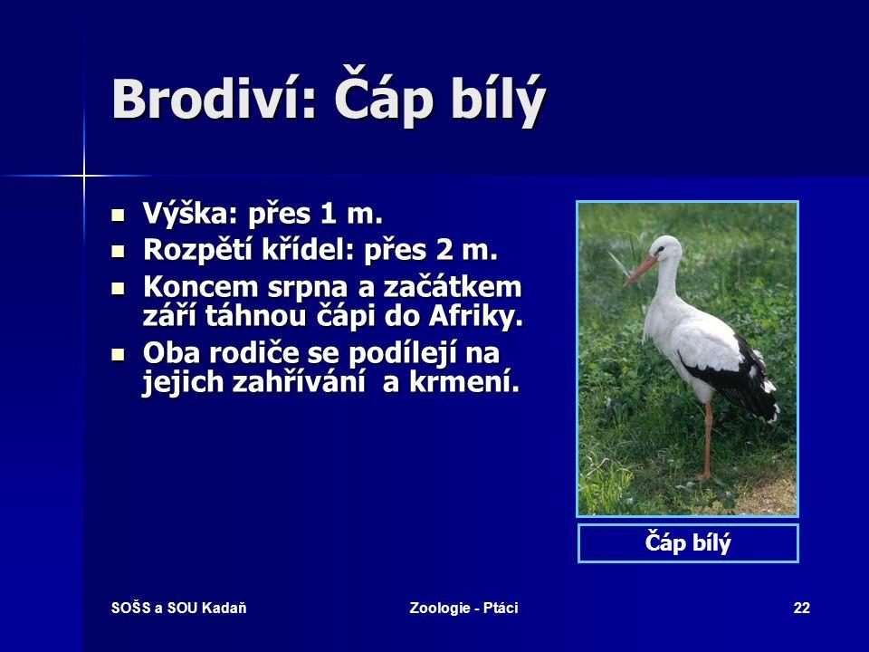 Brodiví: Čáp bílý Výška: přes 1 m. Rozpětí křídel: přes 2 m.