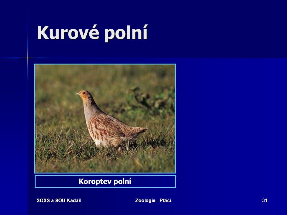 Kurové polní Koroptev polní SOŠS a SOU Kadaň Zoologie - Ptáci
