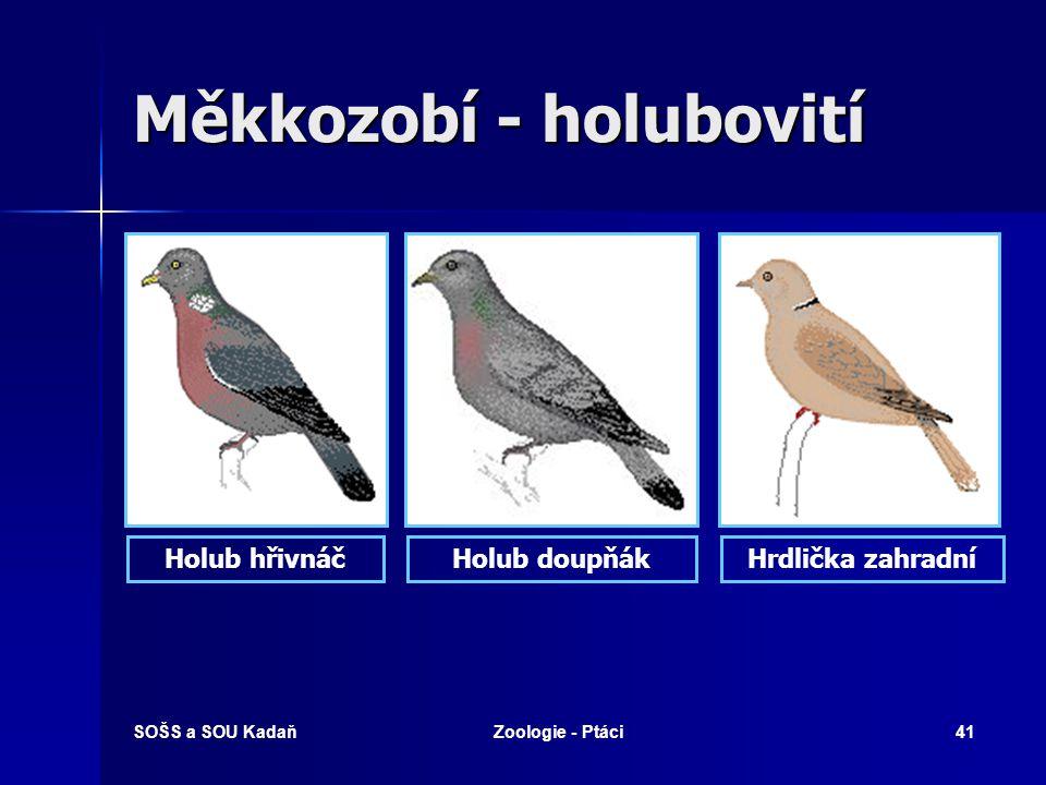 Měkkozobí - holubovití
