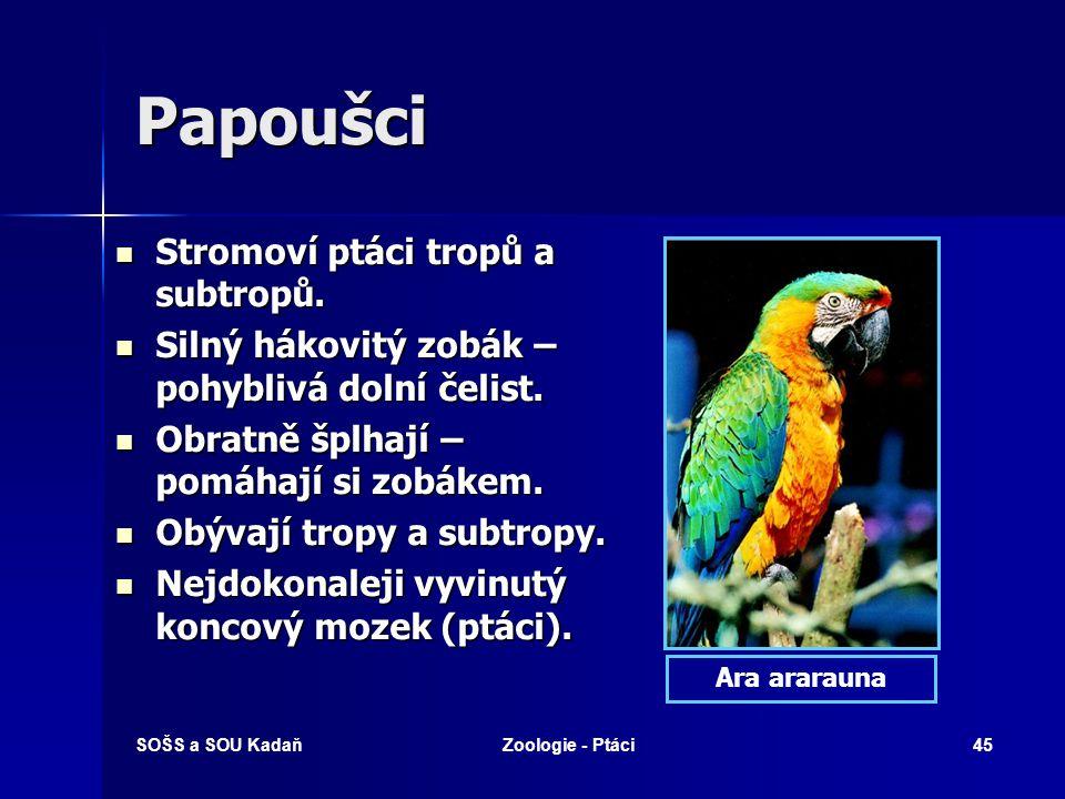 Papoušci Stromoví ptáci tropů a subtropů.