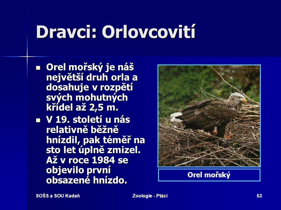 Dravci: Orlovcovití Orel mořský je náš největší druh orla a dosahuje v rozpětí svých mohutných křídel až 2,5 m.