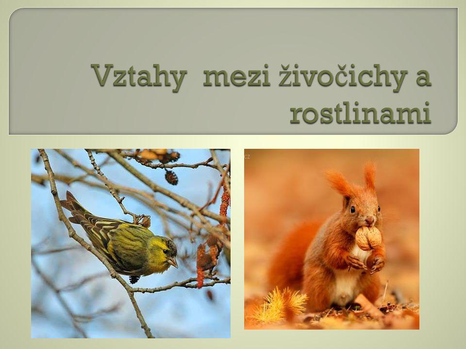 Vztahy mezi živočichy a rostlinami