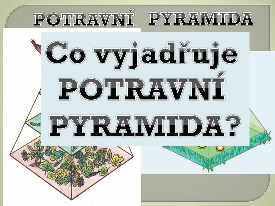 Co vyjadřuje POTRAVNÍ PYRAMIDA