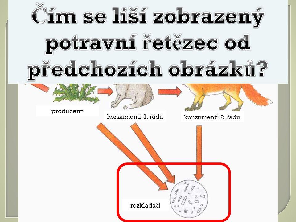 Čím se liší zobrazený potravní řetězec od předchozích obrázků
