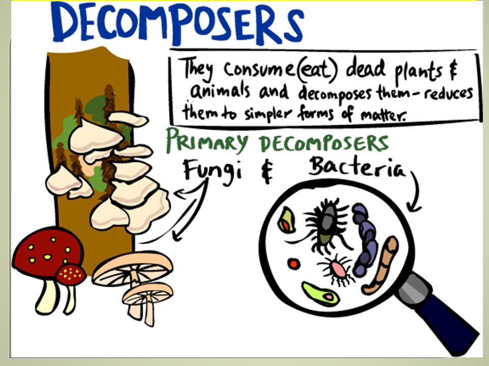ROZKLADAČ je organismus, který jako potravu využívá zbytky mrtvých těl rostlin a živočichů i jejich výkalů, a rozkládá je na jednodušší látky, tzv. humus. Rozkladači žijí hlavně v půdě. K rozkladačům patří například: